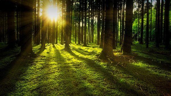 Mit Abstand der sauberste Wald!